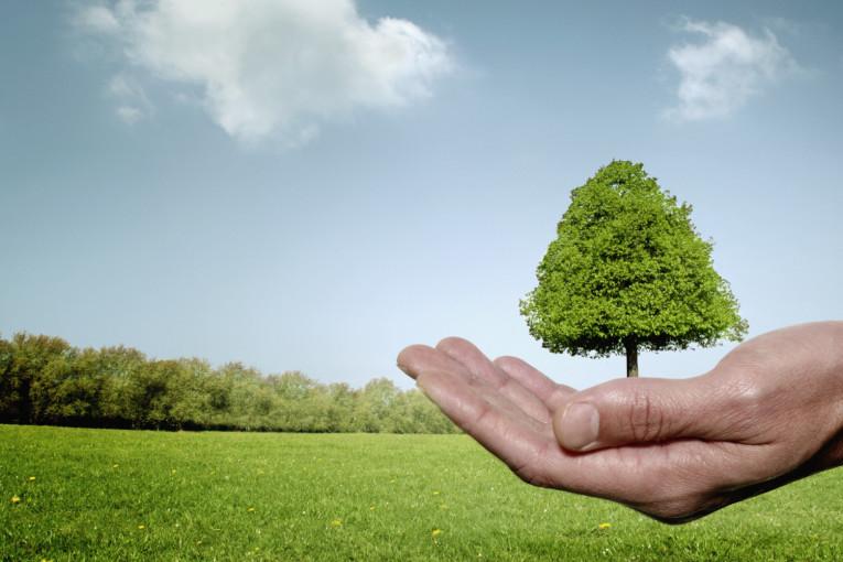 Businessman cupping hand around tree