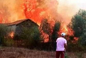 بلاغ لجمعية تلاسمطان للبيئة والتنمية حول الحرائق الأخيرة بغابات شفشاون